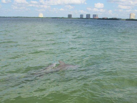 Hyatt Coconut Plantation: Dolphin fun!