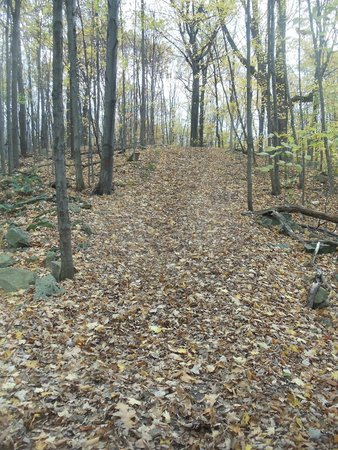 Town of Lockport Nature Trail