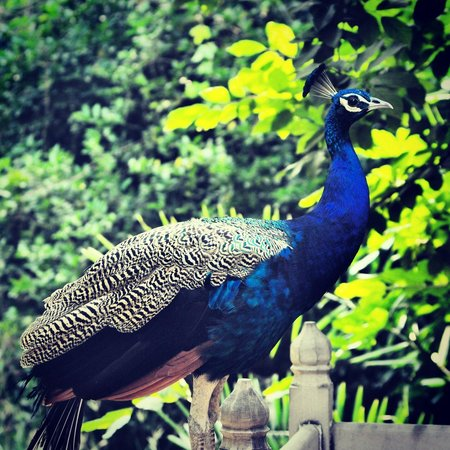 The Bagh : Birds on the property