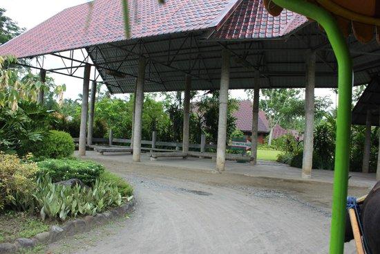 Carabao Ride 2 Picture Of Villa Escudero Tiaong
