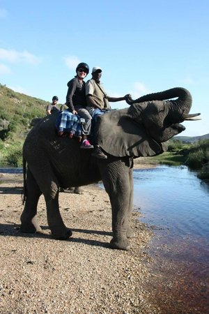 Botlierskop Private Game Reserve: Elephant Ride