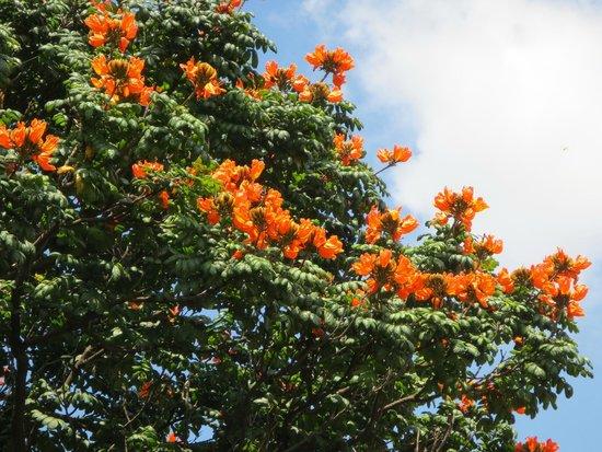Ballal Residency: Tulip Tree direkt am Balkon