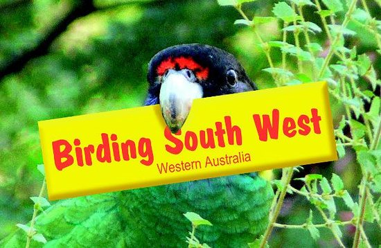 Birding South West - Day Tours
