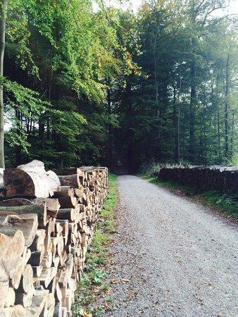 Forêt de Soignes : Drève de Lorraine