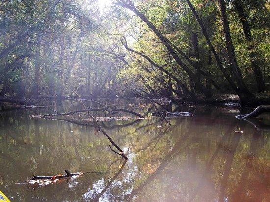 Pocomoke River Canoe Company: A wonderful treat kayaking through here.