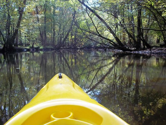 Pocomoke River Canoe Company: Kayaking down the creek. About 1/2 of this trip was the creek and half the river.
