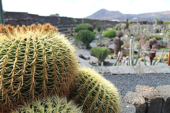Jardin de cactus picture of jardin de cactus guatiza for Jardin cactus madrid