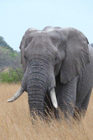 Metsi Lodge : Elephants on Drive