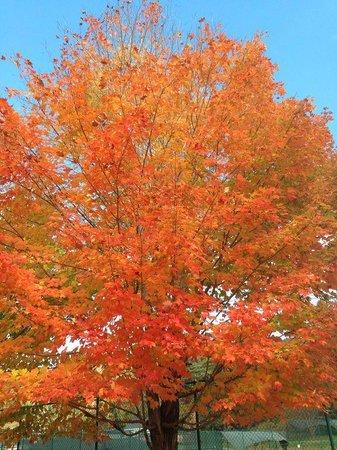 Golden Eagle Lodge: Fall 2014