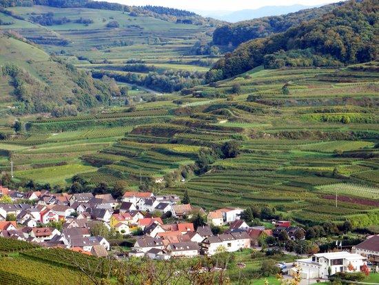 Vogtsburg im Kaiserstuhl, ألمانيا: Blick auf die Weinterrassen