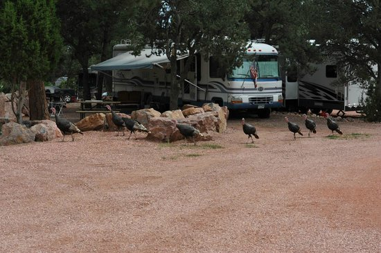 Lovely Mountaindale Cabins U0026 RV Resort: Wild Turkeys On Parade