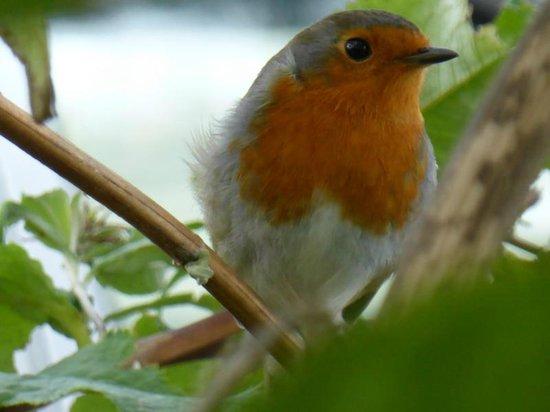 """St Ann's House: """"Robin"""" im Garten von Bob und Ann"""
