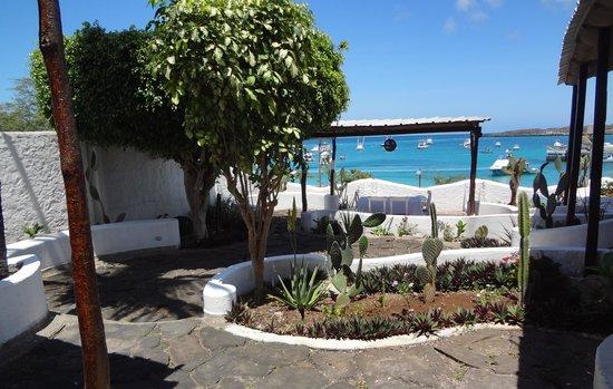 Casa Opuntia Galapagos: garden