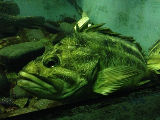 Oceanarium Akvamir: Грустит