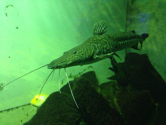 Oceanarium Akvamir: .