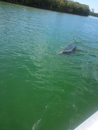 Rose Marina Boat Rentals : Seeing dolphins made the day perfect