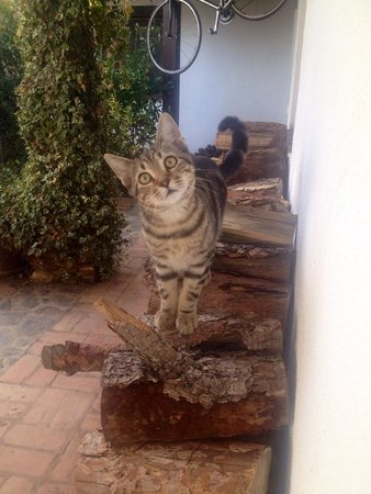 Pure Mountains : Tommy the cute cat!