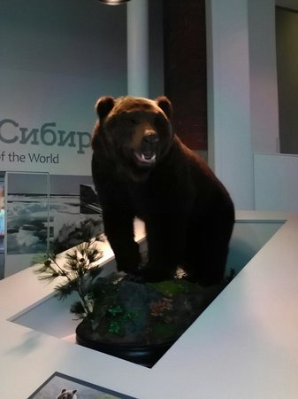 The Manchester Museum: Brown bear
