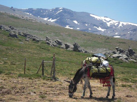Guejar Sierra, Spanje: el arriero