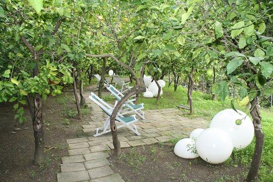 La Casa Dei Limoni : Lemon Garden