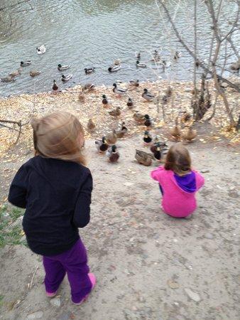Sacajawea Park: Feeding the ducks
