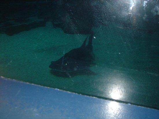 Seals Picture Of Adventure Aquarium Camden Tripadvisor