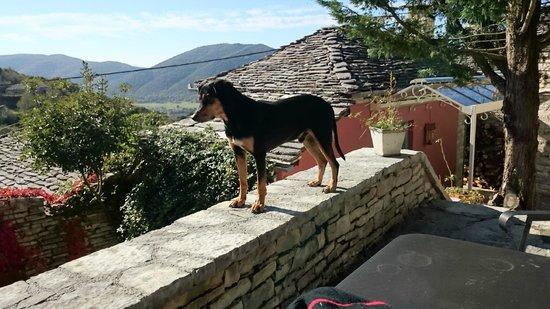 Primoula Country Hotel and Spa: Πίσω από τον σκυλάκο το σπιτάκι νο 6