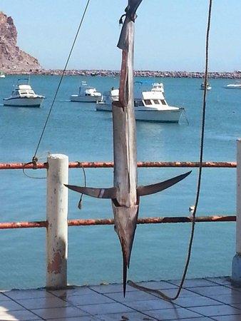 Viking's Fleet: Disfrutando de las actividades de Mazatlán