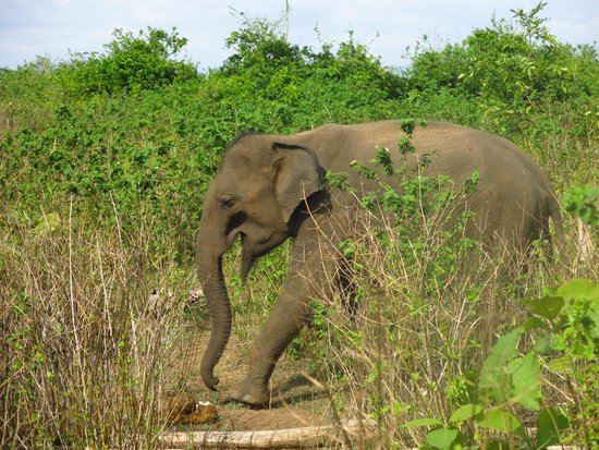 Lanka Tracker - Day Tours : Udawalawe Park