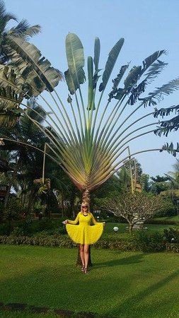 Chalston Beach Resort: Пальма