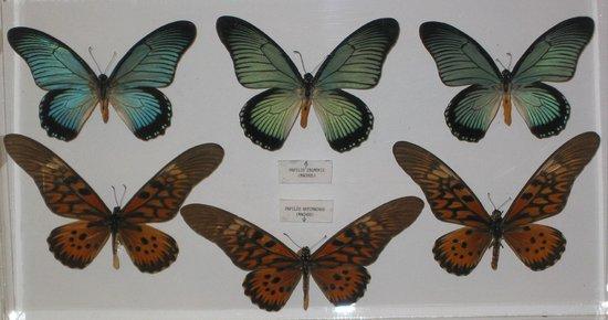 Museo Mariposas del Mundo