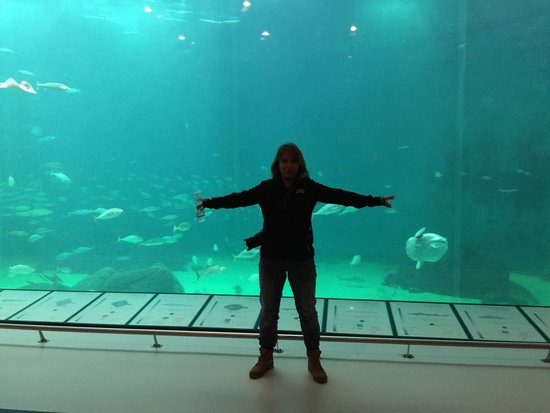 Nordsoen Oceanarium: Das große Aquarium
