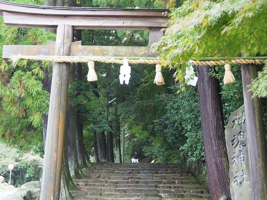 Kamosu Shrine: 鳥居