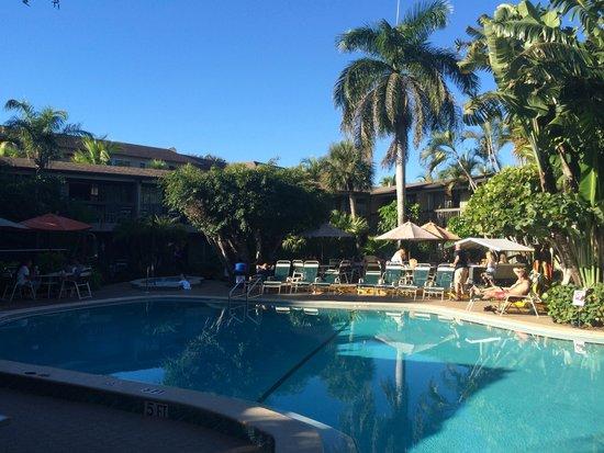 BEST WESTERN Naples Inn & Suites: piscine
