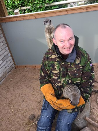 Vale Royal Falconry Centre: On the look out!