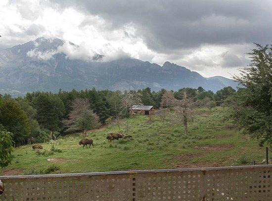 Parque Faunistico - La cuniacha: Bizons in het park van Lacuniacha