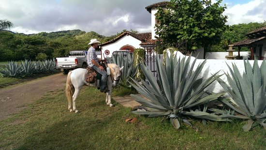 Rancho Chilamate Off-Grid Guest Ranch: get me the largest yucca plant you can