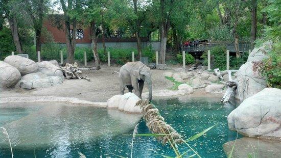 Utah's Hogle Zoo: Baby elephant at man-made river