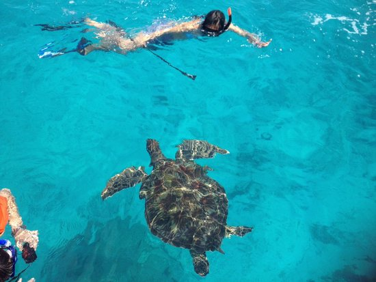 SeaStar Andaman - Day Tours: Swim wiv Tuttle