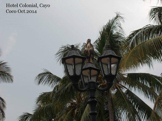 Hotel Colonial Cayo Coco : Birds eye view