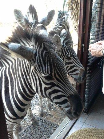 Bushwise Safaris : Welcoming committee at Bushwise