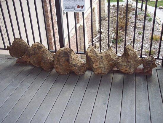 Hurstville Interpretive Center: wood chewed by a beaver