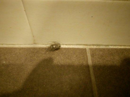 Sky Star Hotel klia klia2: Bathroom hairballs