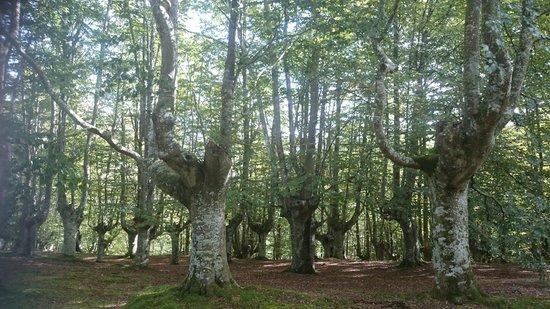 Urkiola Natural Park: Bosque de Hayas