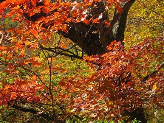 Nishizawa Canyon: 紅葉