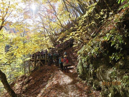 Nishizawa Canyon: こんな階段を登るところも