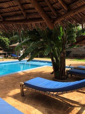 Honey Badger Lodge: Pool area