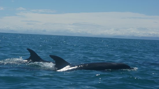 Marahau Sea Kayaks: 2 Dolphins Near by our Kayak and later under