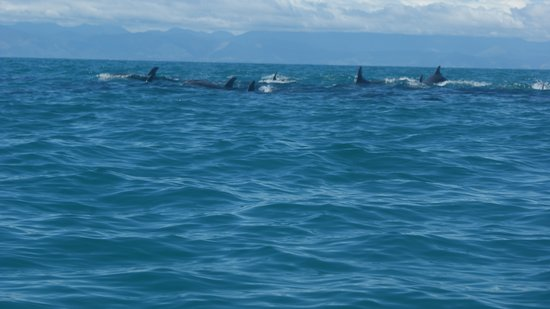 Marahau Sea Kayaks: part of the group that coutet about 15 to 20 Dolphins
