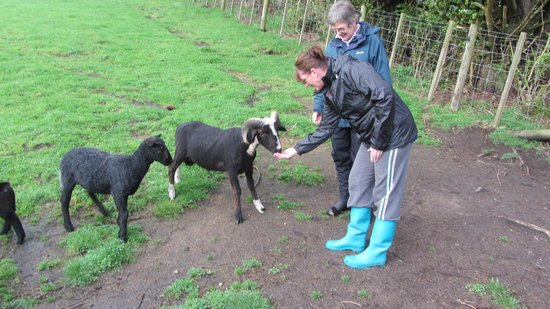 Lakeview Heights Farm Stay: feeding the sheep